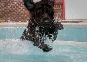 Hemi launching into the pool