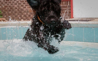 Hemi launching into the pool