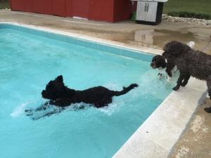 Hemi in the water