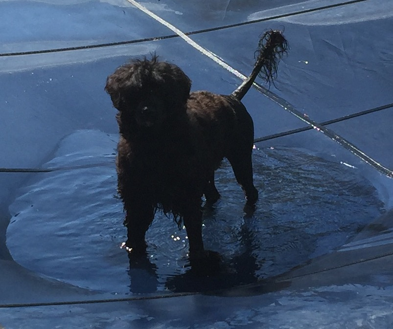 Fable on the pool cover
