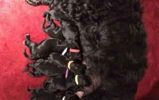 Peeps pups on their 0 birthday