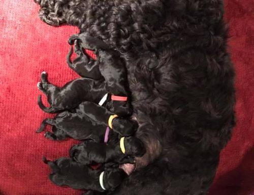 Peeps Pups Have Arrived!