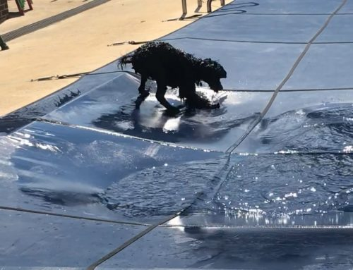 TipSea and the pool cover puddle!